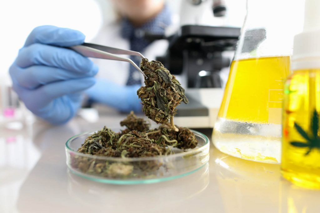Why should cannabis be lab tested ga